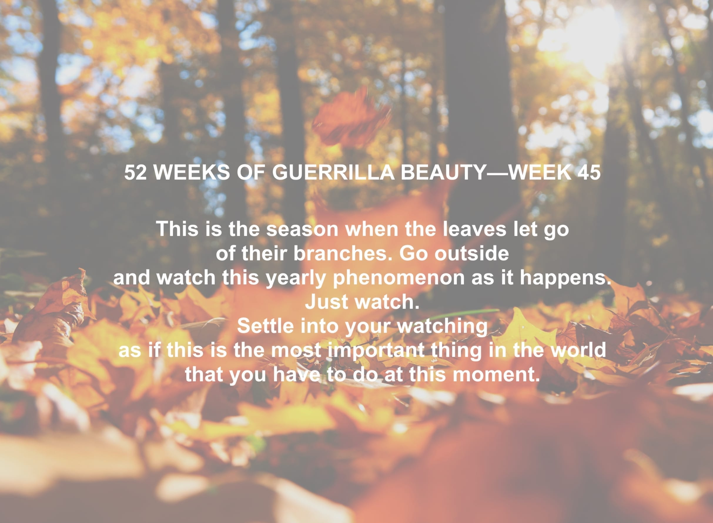 52 WEEKS—45