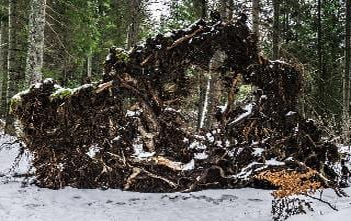 Jura 2149 Through The Roots Of A Fallen Tree By Swissnaturelover Dczqlxt Pre